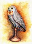 Hedwig by ElConsigliere