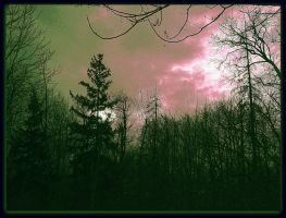 Sunset - April In The Forest by surrealistic-gloom