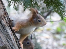 Squirrel 189 by Cundrie-la-Surziere
