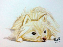 Pomeranian sketch by ashti7