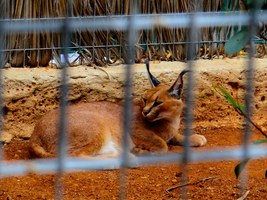 Pafos Zoo -19- by IoannisCleary