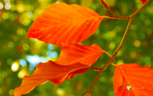 Windows 8 Leaves by rehsup