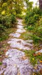 Path in the woods by tabycat25