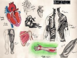 NHM Sketches: Human Biology 1 by HeavyClaw