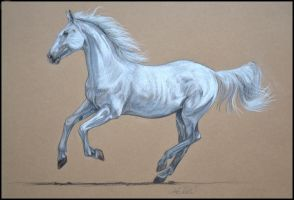 Drawing- Kladruby horse by Ennete