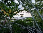Mangrove by ecfield