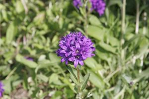 This is a purple flower by swimming-girl1