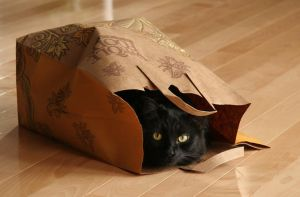 Cat in a Bag by BlackRoomPhoto