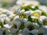 Macro photography 8 by BlueX-pl