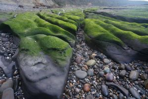 Mossy Waves by ArchaicMosaic