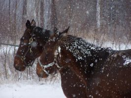 First snow of the season by Cainamoon