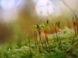Glowing moss. by TwoPromises