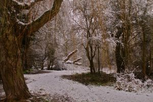 Snowy Woods by CharlieR321