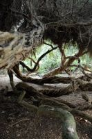Twisted Trees 11 by LinzStock