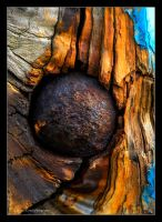 The spreading of a rusty palette by LordLJCornellPhotos