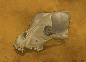 Dog Skull by pixelfish