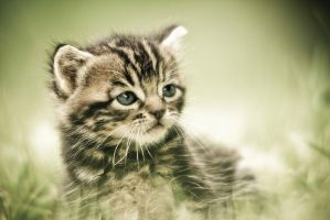 Le petit chaton de base by Sblourg