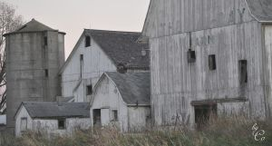 Old White Barns by IamCo