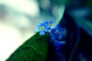 forget me not by freakeesh