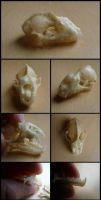 Diadem Leaf-Nosed Bat Skull by CabinetCuriosities
