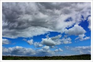 Sky and Treeline by neoweb