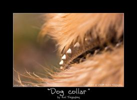 Dog callar by koltregaskes
