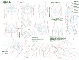 Anatomy Hip Male by Bardi3l