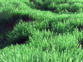 Grassy Knoll by digitalbiscuits