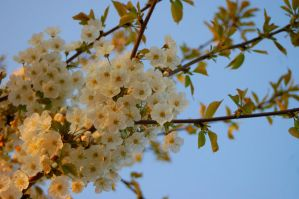 Blooming Tree by Lilino