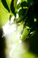 Ray of light by DaaMaaN