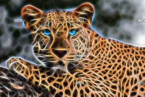 Blue eyed Leopard by QueenoftheLions15