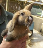 Cute Bunny at Seaview by Deadbydefault