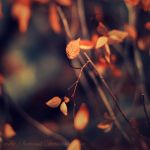 Light and Air by Sortvind