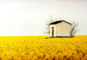 tranquility in yellow by sharktooth