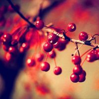 BerryAutumn.... by airicalush
