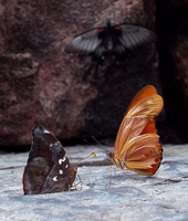 Niagara Butterfly House - Three Friends by Ammoniite