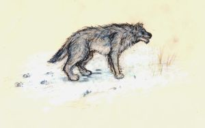 Wolf Drawing by Nuvenas