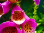 Pink beauty by Namyi-Pictures