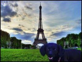 Shaiki Goes to Paris by chloerosewolf