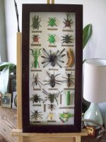 PLASTIDERMY FAUX TAXIDERMY BUGS/ INSECTS by pookielou