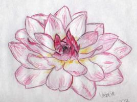 a flower by valerie2776