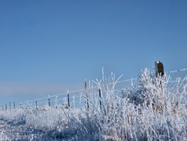 snowy fence 16 by fotophi