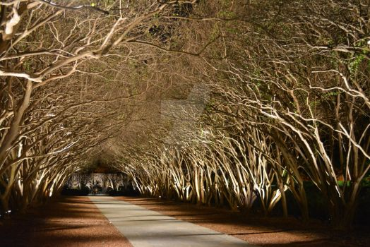 Tree Walkway by SolaceSong