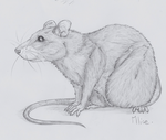 Another Rat by x-Mlice