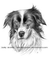 Border Collie by DetailsMatter