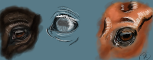 Horse eyes study by All-the-Kings-Horses