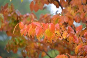 Wet Autumn Colors 11-1-13 by Tailgun2009