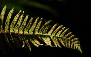 Fern Slide by ISeeTheLattice