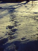 prints in the snow by Xxdevious1xX