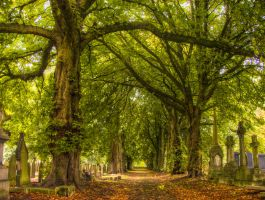 Path through Cemetery STOCK by needanewname